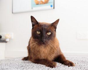 Monier vet clinic cat