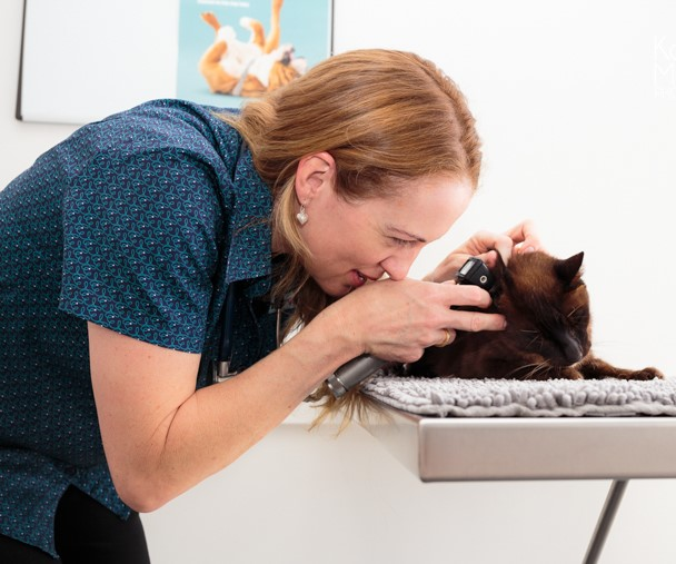 Dr Lucilla Pratt from Monier exams a cats ears