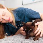 Dr Lucilla Pratt examining cat